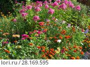 Купить «Миксбордер с разноцветными летними цветами», эксклюзивное фото № 28169595, снято 21 августа 2017 г. (c) Елена Коромыслова / Фотобанк Лори