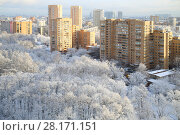 Купить «Frozen white trees in park in residential area in Moscow at sunny winter day», фото № 28171151, снято 23 ноября 2015 г. (c) Losevsky Pavel / Фотобанк Лори