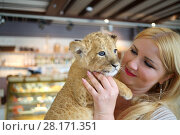 Купить «Blonde smiles and holds calf of lion close on her hands in cafe», фото № 28171351, снято 13 июля 2016 г. (c) Losevsky Pavel / Фотобанк Лори