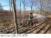 Купить «Firefighter is irrigating in the forest with naked trees. Inscription on the uniform Fire protection MES of Russia.», фото № 28171979, снято 11 апреля 2015 г. (c) Losevsky Pavel / Фотобанк Лори