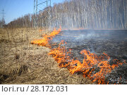 Купить «Burning dry grass along the birch grove in the spring», фото № 28172031, снято 12 апреля 2015 г. (c) Losevsky Pavel / Фотобанк Лори