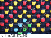Купить «Rows of multi-color pots with faded and dried flowers on wall», фото № 28172343, снято 30 октября 2015 г. (c) Losevsky Pavel / Фотобанк Лори