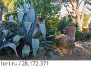 Купить «Large cactus, green shrubs and old vase next to tourist hotel Mediterranean», фото № 28172371, снято 2 августа 2016 г. (c) Losevsky Pavel / Фотобанк Лори
