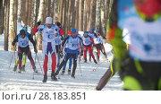 Купить «KAZAN, RUSSIA - March, 2018: slow motion of winter men's ski marathon, athletes skiers running in the woods», видеоролик № 28183851, снято 9 апреля 2020 г. (c) Константин Шишкин / Фотобанк Лори