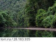 Купить «River in rainforest in Misool, Gam river, Raja Ampat, Western Papua, Indonesian New Guinea», фото № 28183935, снято 24 августа 2019 г. (c) Nature Picture Library / Фотобанк Лори
