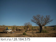 Купить «Australian baobab  / Boab trees (Adansonia gregorii) against the Cockburn Ranges with the four-wheel drive car parked, Kimberley, Western Australia. June 2016.», фото № 28184575, снято 19 августа 2018 г. (c) Nature Picture Library / Фотобанк Лори