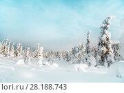 Купить «Зимний пейзаж с елями. Гора Кивакка. Северная Карелия. Россия», фото № 28188743, снято 8 марта 2018 г. (c) Наталья Осипова / Фотобанк Лори