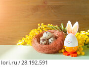 Купить «Easter background. Easter bunny and eggs in the nest near the mimosa flowers, free space for Easter festive text», фото № 28192591, снято 27 февраля 2018 г. (c) Зезелина Марина / Фотобанк Лори