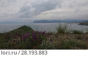 Купить «Клевер растет на вершине холма, вдали море и Карадаг. Крым», видеоролик № 28193883, снято 21 мая 2017 г. (c) Яна Королёва / Фотобанк Лори