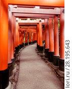 Купить «Senbon torii, a long empty path of Vermillion red Torii gates at Fushimi Inari Taisha shrine in Kyoto, Japan.», фото № 28195643, снято 20 ноября 2017 г. (c) age Fotostock / Фотобанк Лори