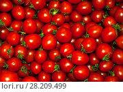 Купить «Background - red ripe plum tomatoes with cuttings», фото № 28209499, снято 21 марта 2018 г. (c) Евгений Харитонов / Фотобанк Лори
