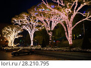 Купить «SEOUL - NOV 3, 2015: Trees covered with lamps at night. Seoul refuses illumination for holidays after death of Kim Jong Il», фото № 28210795, снято 3 ноября 2015 г. (c) Losevsky Pavel / Фотобанк Лори