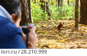 Купить «Man (out of focus) shoots wild squirrel in sunny autumn forest», фото № 28210999, снято 10 октября 2016 г. (c) Losevsky Pavel / Фотобанк Лори