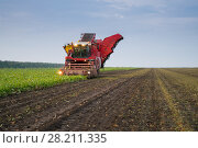 Купить «KRASNODAR REGION, RUSSIA - AUG 18, 2015: Combine harvester harvest of ripe sugar beet at evening, In 2015 in Krasnodar region yields reached record level - 58.4 centners per hectare», фото № 28211335, снято 18 августа 2015 г. (c) Losevsky Pavel / Фотобанк Лори