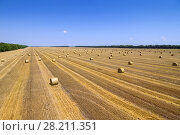 Купить «Large field after harvesting with stacks of collected wheat and blue sky», фото № 28211351, снято 8 июля 2015 г. (c) Losevsky Pavel / Фотобанк Лори