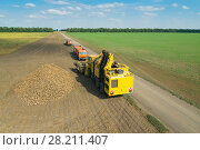 Купить «KRASNODAR REGION, RUSSIA - AUG 19, 2015: Yellow harvester, sugar beet heap, trucksp at field, In 2015 in Krasnodar region yields reached record level - 58.4 centners per hectare», фото № 28211407, снято 19 августа 2015 г. (c) Losevsky Pavel / Фотобанк Лори