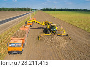 Купить «KRASNODAR REGION, RUSSIA - AUG 19, 2015: Machine loads of sugar beet into orange truck, In 2015 in Krasnodar region have collected record grain harvest - 102 million tons of grain», фото № 28211415, снято 19 августа 2015 г. (c) Losevsky Pavel / Фотобанк Лори