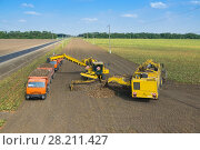 Купить «KRASNODAR REGION, RUSSIA - AUG 19, 2015: Machine loads of sugar beet into orange truck and harvester pours harvest, In 2015 in Krasnodar region have collected record grain harvest - 102 million tons of grain», фото № 28211427, снято 19 августа 2015 г. (c) Losevsky Pavel / Фотобанк Лори