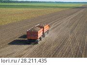 Купить «Orange truck with trailer with sugar beet goes on field at summer sunny day», фото № 28211435, снято 19 августа 2015 г. (c) Losevsky Pavel / Фотобанк Лори