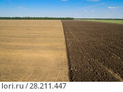 Купить «KRASNODAR REGION, RUSSIA - AUG 19, 2015: Modern green tractor plows field after harvest, In 2015 in Krasnodar region yields reached record level - 58.4 centners per hectar», фото № 28211447, снято 19 августа 2015 г. (c) Losevsky Pavel / Фотобанк Лори