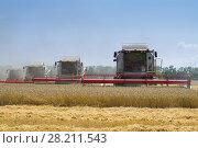 Купить «KRASNODAR REGION, RUSSIA - JUL 7, 2015: Harvesters harvest yellow wheat field, In 2015 in Krasnodar region have collected record grain harvest - 102 million tons of grain», фото № 28211543, снято 7 июля 2015 г. (c) Losevsky Pavel / Фотобанк Лори