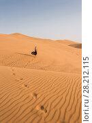 Купить «Woman in black dress goes on yellow sand in desert at sunny hot day», фото № 28212115, снято 12 января 2017 г. (c) Losevsky Pavel / Фотобанк Лори