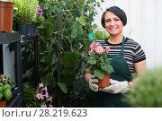 Купить «florist holding pot with flower», фото № 28219623, снято 21 октября 2018 г. (c) Яков Филимонов / Фотобанк Лори