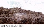 Купить «Crabs are sitting on a rock in the surf zone», видеоролик № 28221851, снято 24 марта 2018 г. (c) Некрасов Андрей / Фотобанк Лори