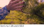 Купить «Hand Of Young Woman Stroking Fir Branches», видеоролик № 28223563, снято 25 мая 2017 г. (c) Pavel Biryukov / Фотобанк Лори