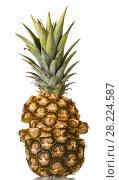 Купить «Large pineapple cut into slices, top green leaves isolated on white», фото № 28224587, снято 22 декабря 2017 г. (c) Сергей Молодиков / Фотобанк Лори