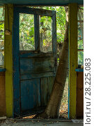 Купить «Tree growing up between a door and its frame in the Chernobyl Exlusion Zone, Ukraine September», фото № 28225083, снято 23 мая 2018 г. (c) Nature Picture Library / Фотобанк Лори