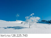 Купить «Winter hoar frosting trees, tower and snowdrifts (Carpathian mountain, Ukraine)», фото № 28225743, снято 23 января 2018 г. (c) Юрий Брыкайло / Фотобанк Лори