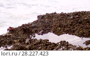 Купить «Crabs are sitting on a rock in the surf zone», видеоролик № 28227423, снято 24 марта 2018 г. (c) Некрасов Андрей / Фотобанк Лори