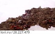 Купить «Crabs are sitting on a rock in the surf zone», видеоролик № 28227479, снято 24 марта 2018 г. (c) Некрасов Андрей / Фотобанк Лори