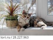 Купить «Portrait of a color cat», фото № 28227963, снято 16 марта 2018 г. (c) Владимир Иванов / Фотобанк Лори