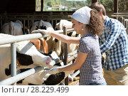 Купить «Man and woman touching cows», фото № 28229499, снято 18 апреля 2019 г. (c) Яков Филимонов / Фотобанк Лори