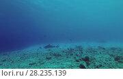 Купить «Tiger Shark swim over reef», видеоролик № 28235139, снято 27 марта 2018 г. (c) Некрасов Андрей / Фотобанк Лори