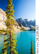 Купить «Moraine Lake, Banff National Park, Alberta, Canada, August 2012.», фото № 28238667, снято 31 мая 2020 г. (c) Nature Picture Library / Фотобанк Лори