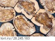 Купить «Mosaic of circular cross-section of a tree.», фото № 28245183, снято 24 октября 2016 г. (c) Андрей Радченко / Фотобанк Лори