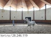 Купить «Показ племенных лошадей арабской породы в манеже Терского конного завода», фото № 28246119, снято 18 июля 2017 г. (c) Ирина Носова / Фотобанк Лори