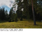 Купить «Forest landscape. Conifer trees on the hill in the dense gloomy mysterious forest», фото № 28247283, снято 21 сентября 2017 г. (c) Зезелина Марина / Фотобанк Лори