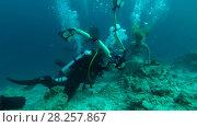 Купить «Professional underwater photographer prepares model for photo shoot in Indian Ocean», видеоролик № 28257867, снято 29 октября 2017 г. (c) Некрасов Андрей / Фотобанк Лори
