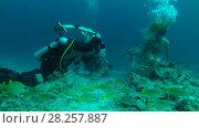 Купить «Professional underwater photographer prepares model for photo shoot in Indian Ocean», видеоролик № 28257887, снято 29 октября 2017 г. (c) Некрасов Андрей / Фотобанк Лори