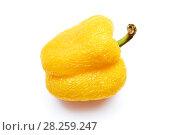 Ссохшийся перец желтого цвета на изолированном белом фоне. Стоковое фото, фотограф Никита Ковалёв / Фотобанк Лори