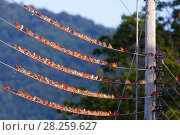 Купить «Madagascar fody (Foudia madagascariensis), flock of males and females resting on a wire, Praslin Island, Republic of Seychelles», фото № 28259627, снято 25 апреля 2018 г. (c) Nature Picture Library / Фотобанк Лори