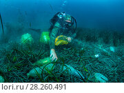 Купить «Scuba diver removing plastic marine litter from the sea bed.  Mljet National Park, Mljet  Island, Croatia. May 2015.», фото № 28260491, снято 5 апреля 2018 г. (c) Nature Picture Library / Фотобанк Лори