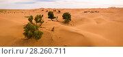 Купить «Aerial panorama of trees in Sahara desert», фото № 28260711, снято 13 февраля 2018 г. (c) Михаил Коханчиков / Фотобанк Лори