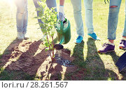 group of volunteers planting and watering tree. Стоковое фото, фотограф Syda Productions / Фотобанк Лори