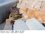 Купить «two cats lying on sofa with book at home», фото № 28261627, снято 15 ноября 2017 г. (c) Syda Productions / Фотобанк Лори