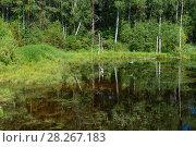 Купить «Лесное озеро с цаплями летним днем», фото № 28267183, снято 8 августа 2017 г. (c) Pukhov K / Фотобанк Лори